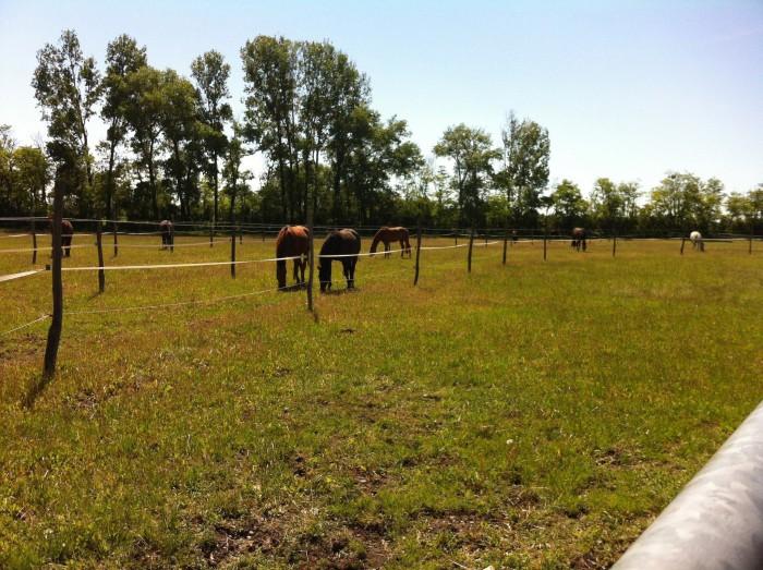 Pferdegruppe auf Sommerweide