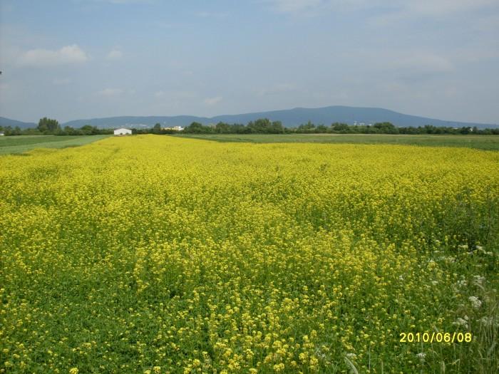 Sommerwiesen Biolandwirtschaft ERIDIAN